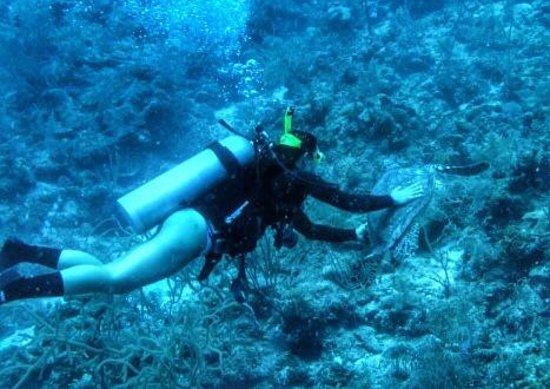 Doctor Dive Costa Maya: Buceo en mahahual