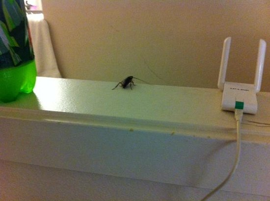 Hawthorn Suites by Wyndham Dallas Love Field Airport: YES, ITS A WATER/ROCH BUG
