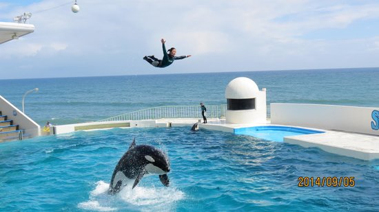 シャチのパーフォーマンス - Picture of Kamogawa SeaWorld, Kamogawa - TripAdvisor