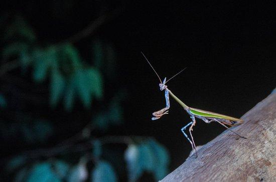 Eco Quechua Lodge: mantis on the railing of our balcony