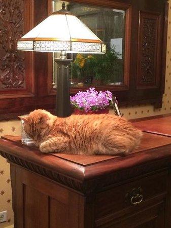 Golden Gate Hotel: Pip,the cat host!