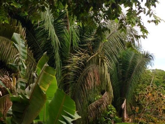 TikiVillas Rainforest Lodge & Spa : view from my villa- ocean in background