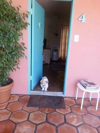 Villa Rosa Inn: Toby on guard duty