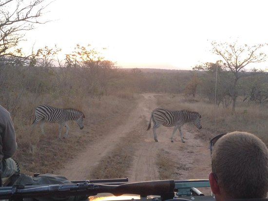 Idube Private Game Reserve Lodge : Zebra Crossing!