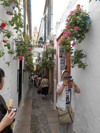 Calleja de las Flores: かわいらしい小道❤