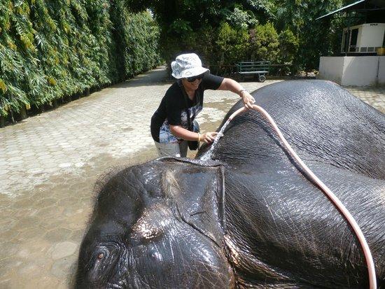 River View Jungle Camp: douche d'éléphant