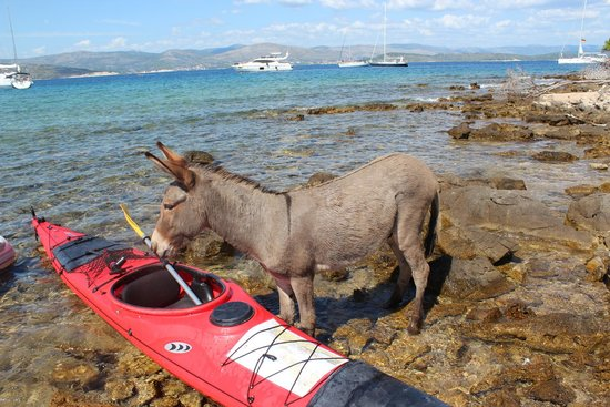 Red Adventures Croatia: Lonely donkey on one of the islands