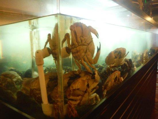 Restaurante O Infante: marisco vivo