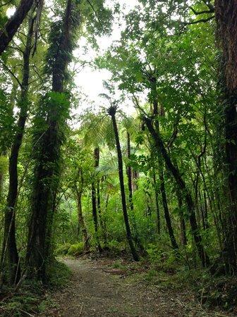 Punga Cove Resort: nearby track