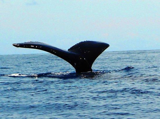 Drake Bay, Costa Rica: 海へと還るクジラ