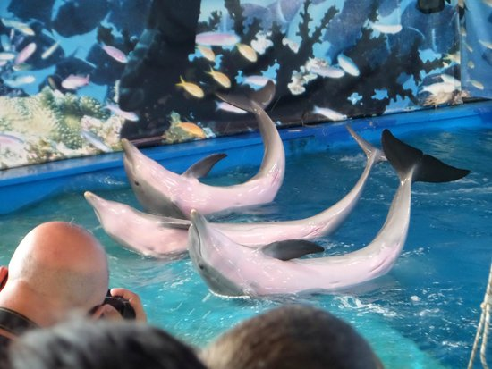 A Joy To See Dolphins In The Flesh Picture Of Barcelona Zoo