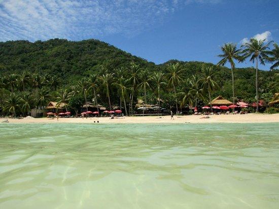 Palm Leaf Resort: Vista del resort
