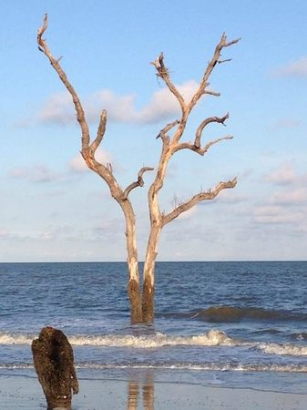 Hunting Island State Park Campground: Tree in the water at Hunting Island State Park