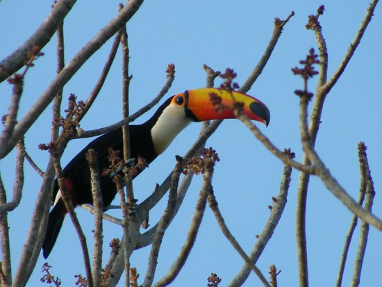 Pouso Alegre Lodge: We saw toucans every day on the tree next to our room