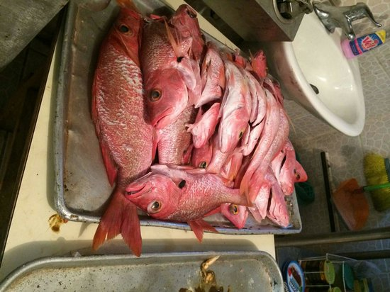 Tito Bloque: Red Snapper