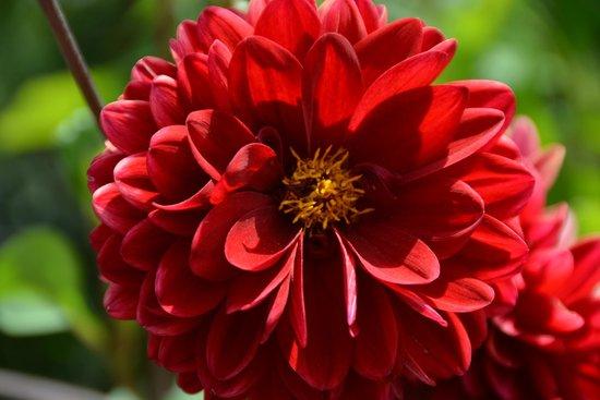 Rosendals Garden : Close up on a flower at Rosendal's Garden