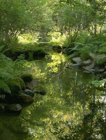 Wild Gardens Of Acadia: Stream Through The Garden.