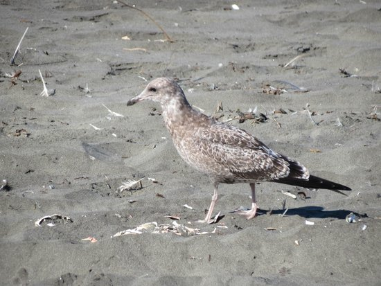 Judith Ann Inn: A friend that followed us on the beach.