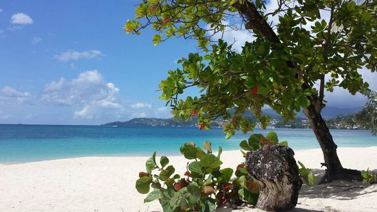 Spice Island Beach Resort: The view from our beach chairs at Spice Island.