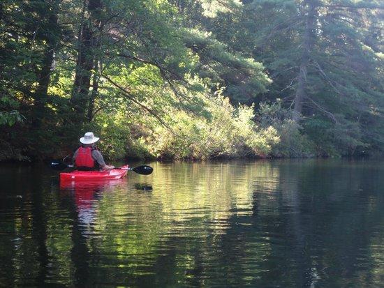 Sebago Trails Paddling Company: Shoreline of Dundee Pond