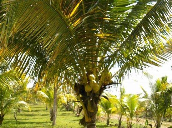 Super Palm Resort: Enjoy a full length of Caribbean setting