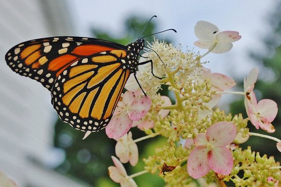 The Pentwater Abbey Bed and Breakfast: Beautiful gardens attract butterflies!
