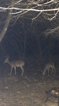 Cypress Creek Cottages: Several deer came up to eat at night, while we were sitting on the patio