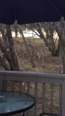 Cypress Creek Cottages: Deer just a few feet from our private patio (Cottage #6)