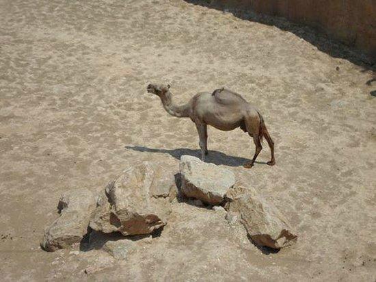 Terra Natura: Camels