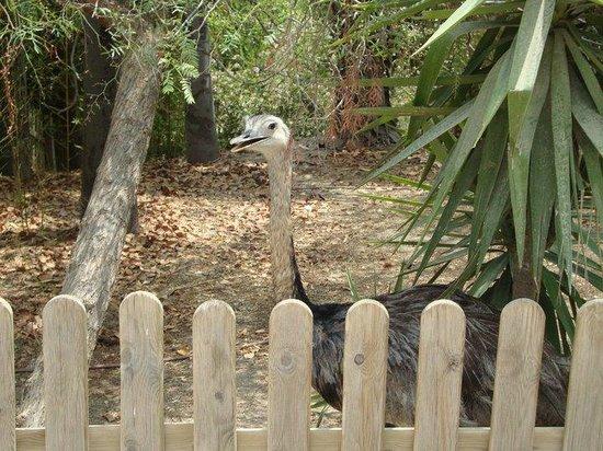 Terra Natura: Ostrich