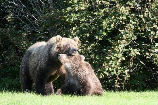 Silver Salmon Creek Lodge: Mom and cub near lodge