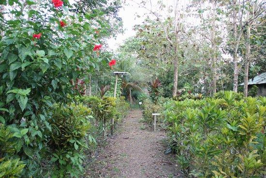 Sabalos Lodge: jardines