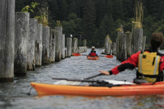 Kayak Tillamook Scheduled Tours