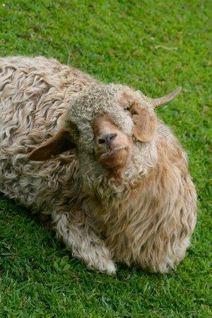 Buttermilk Falls Inn & Spa: Cute Animals
