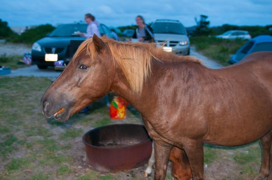 Assateague State Park Camping : Late visitor