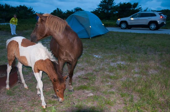 Assateague State Park Camping: Late vistor