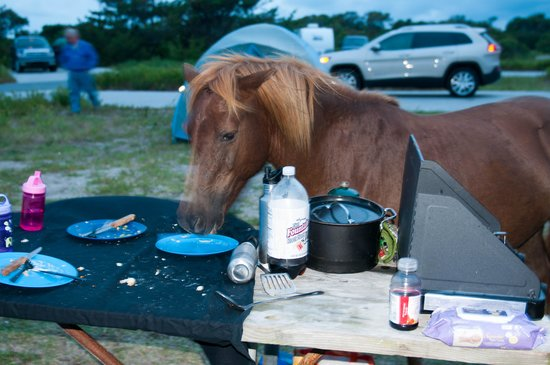 Assateague State Park Camping : To late for dinner