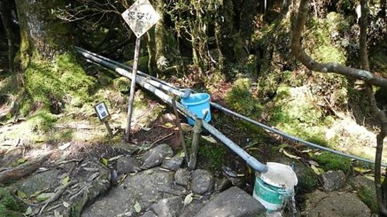 白谷小屋の水場 冷たくて旨い - Picture of Shiratani Unsuikyo Valley, Kumage-gun Yakushima-c...