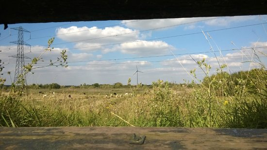 The Forest of Marston Vale - Forest Centre: One of the views during our walk