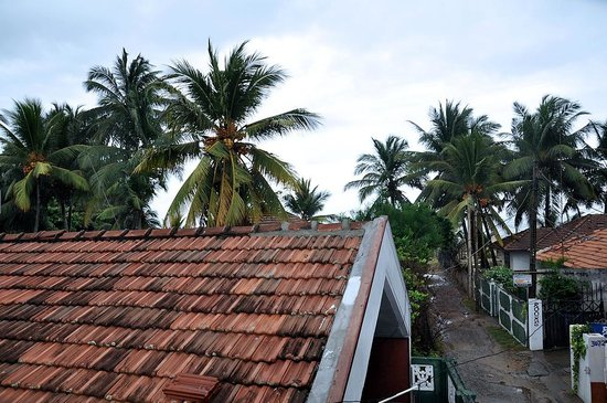 Beach Monkey @ Colombo Airport: Look from the house