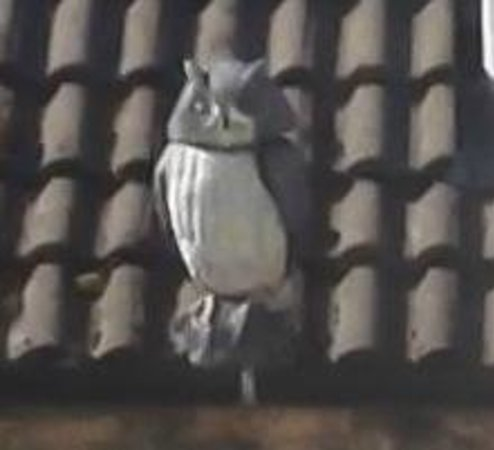 Rosedale Guest House: The 'real' owl......Yes dear....it's real.......
