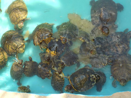 Aquaworld Aquarium & Reptile Rescue Centre : turtles