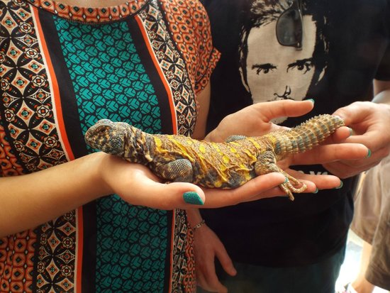Aquaworld Aquarium & Reptile Rescue Centre : A reptile