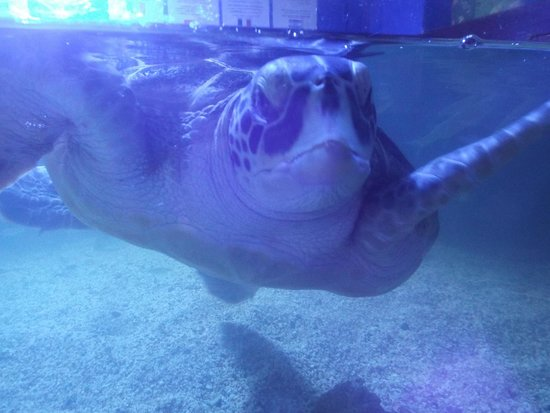 Aquaworld Aquarium & Reptile Rescue Centre : Rescued turtle
