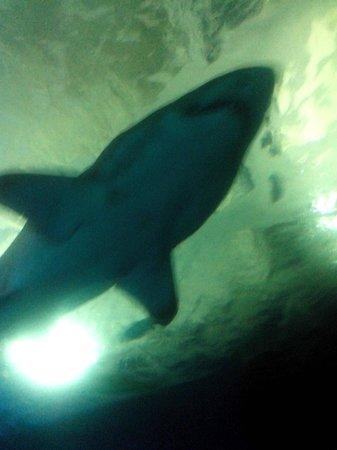 Aquarium Almunecar