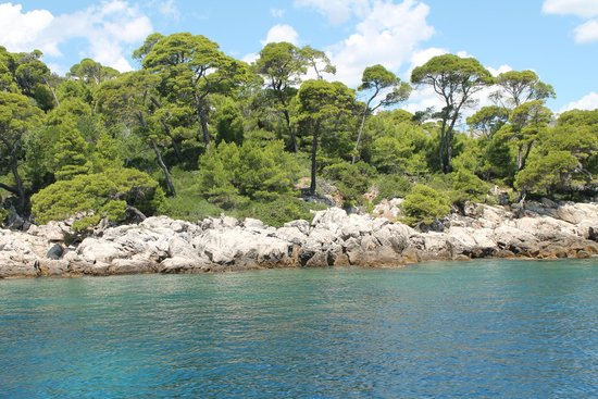 Island of Lokrum: Beautiful vegetation