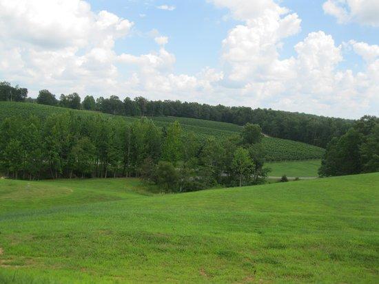 Jones von Drehle Vineyards: view from patio