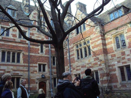 Yale University: Vista dos prédios da Yale