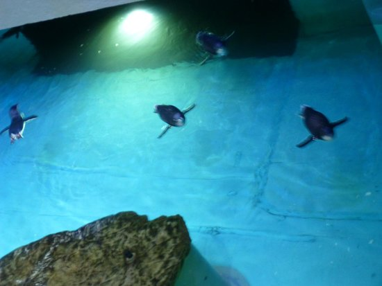 Swimming Penguins Picture Of New England Aquarium Boston Tripadvisor