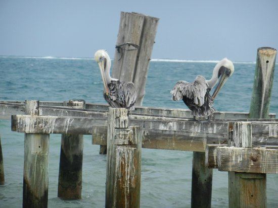 Excellence Riviera Cancun : Birds